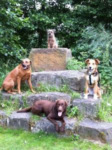 Hunde aufm Stein